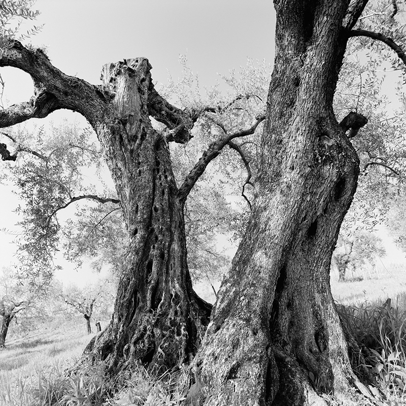 artistic photos mediterranean trees